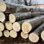 Зимняя заготовка древесины для бани
