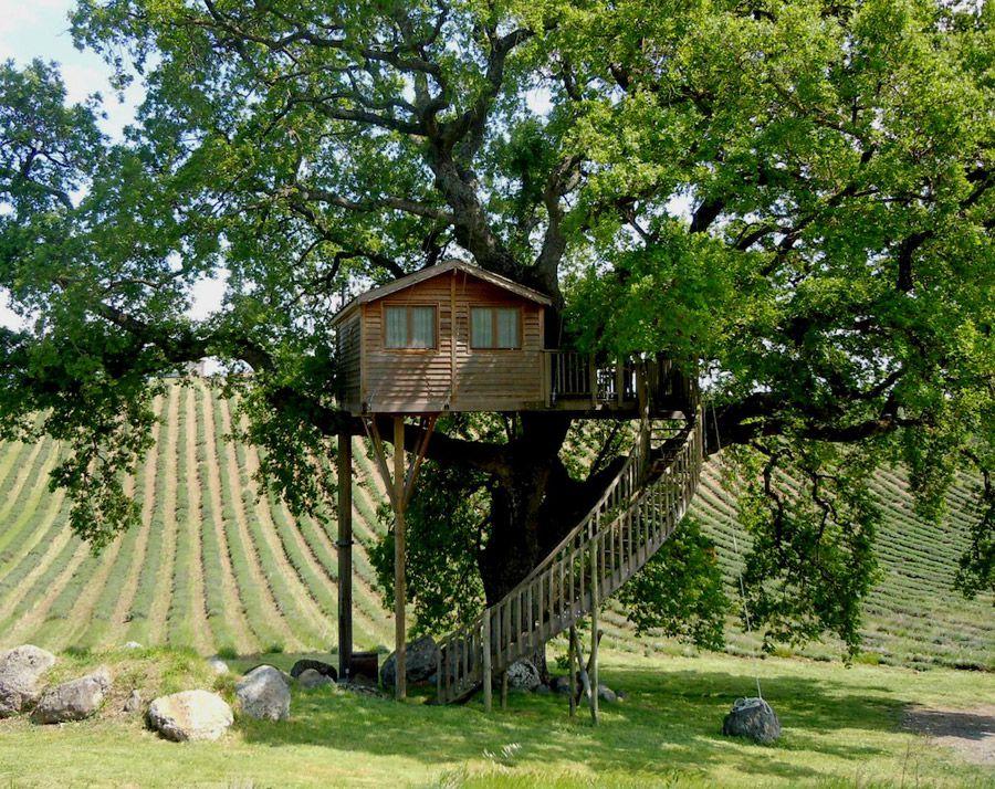 Рисунок 1 – Отличное жилище на дереве